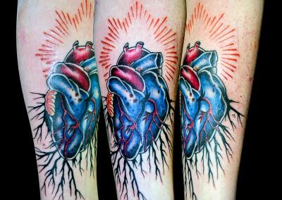 heart-roots_Aufbau