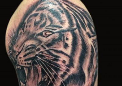 tiger-tattoo